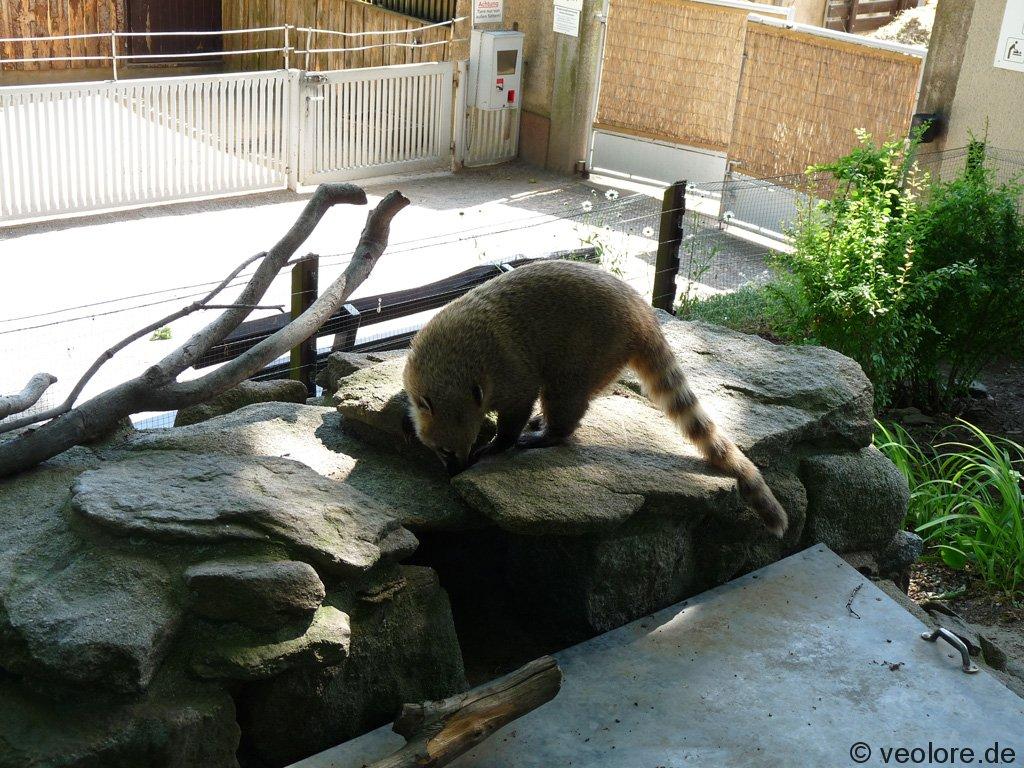 bischofswerda_zoo15
