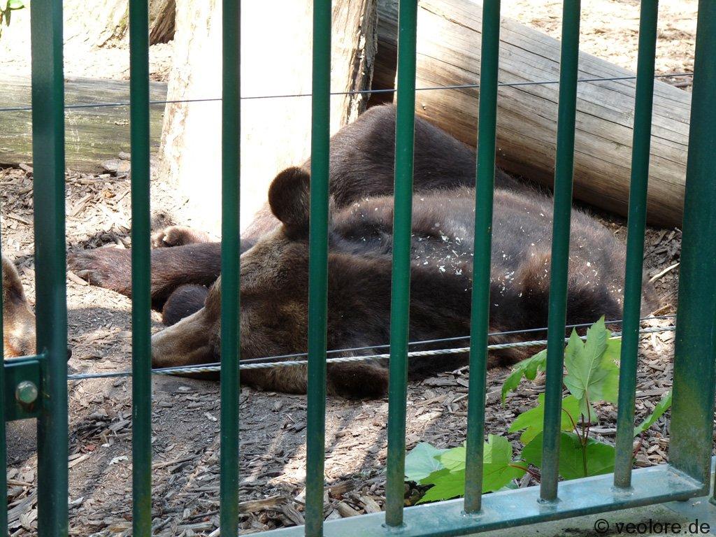 bischofswerda_zoo21