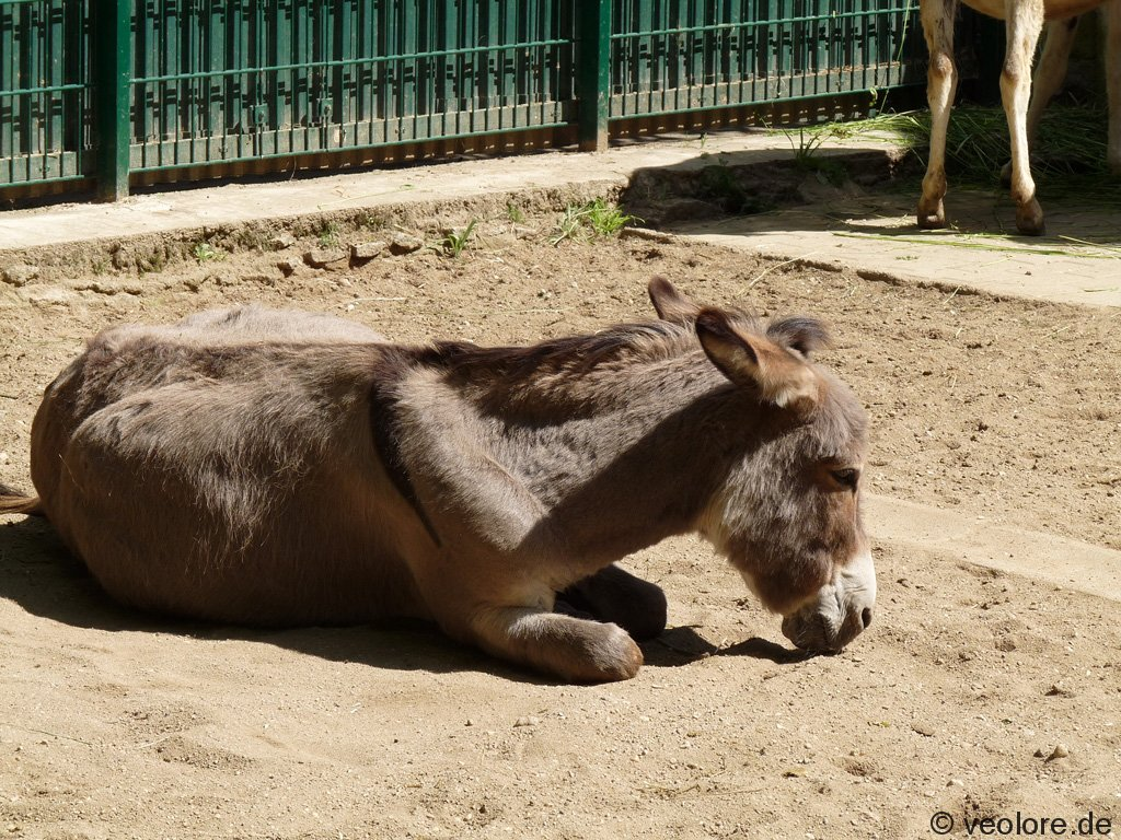 bischofswerda_zoo24