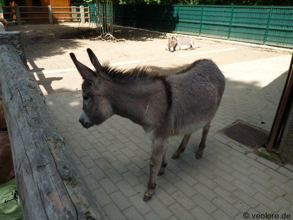 bischofswerda_zoo26