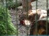 bischofswerda_zoo02