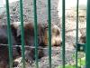 bischofswerda_zoo20