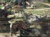 leipzig_zoo_10