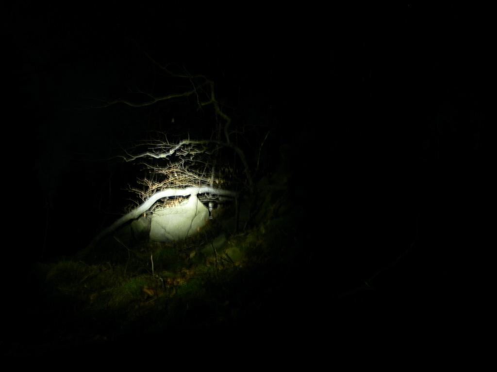 LED Lenser P5R Nachtbilder