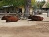 zoo_goerlitz_04