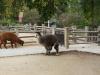 zoo_goerlitz_09