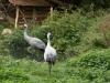 zoo_goerlitz_12