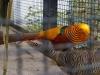 zoo_goerlitz_14